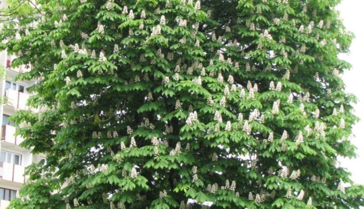 drzewa_048a